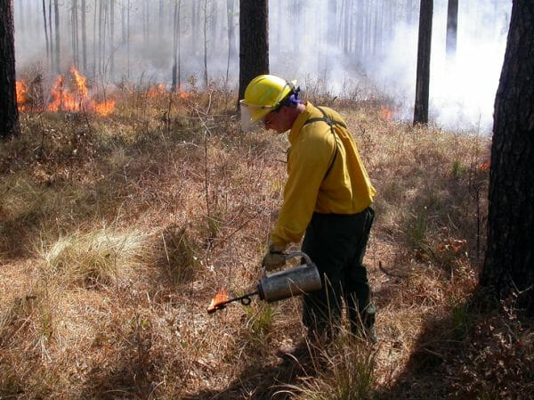 Fire Ecology Technician, Jason Isbell, lights prescribed burn on the Wade Tract, 2009.