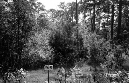 Photo point taken on Tall Timbers in 1995