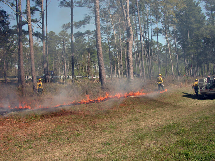 Prescribed burn on the Kate Ireland Parkway