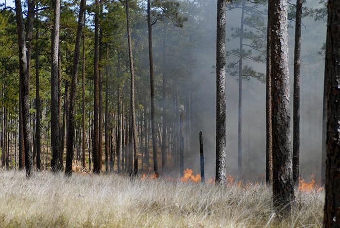 Growing season burn photo
