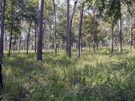 Shortleaf pine-oak-hickory forest community