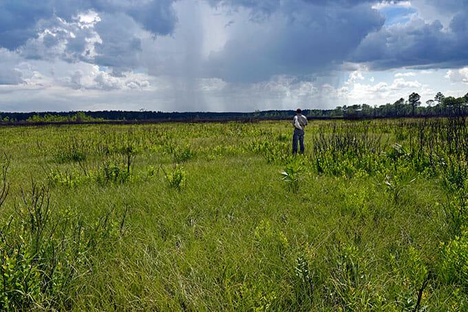 JoVann Hill in the field