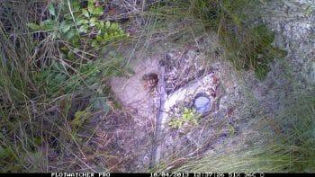 Young tortoise basking