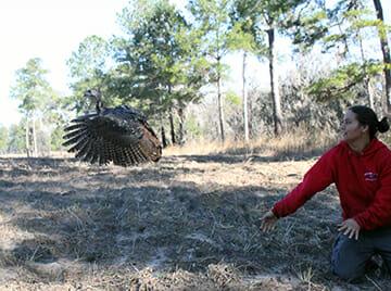 Cassie Griffith releasing turkey hen