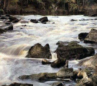 The Aucilla River in Florida