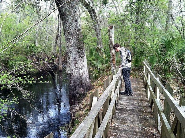 Hiker on Aucilla Sinks trail
