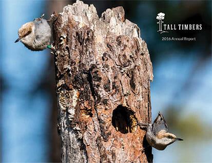 Birds on a tree