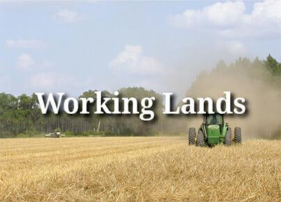 working lands