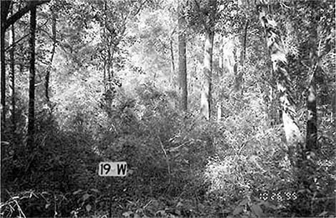 Old Photo of Forest Growth
