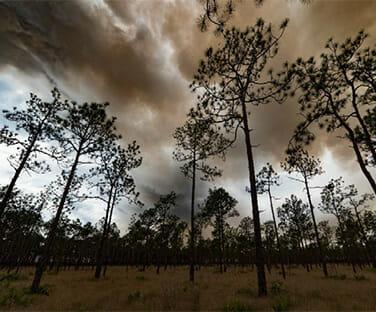 Wildland Fire Science