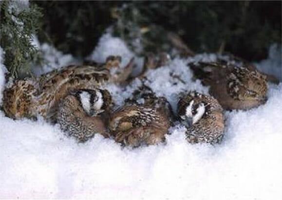 Sleeping Birds