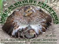 American Wildlife Enterprises